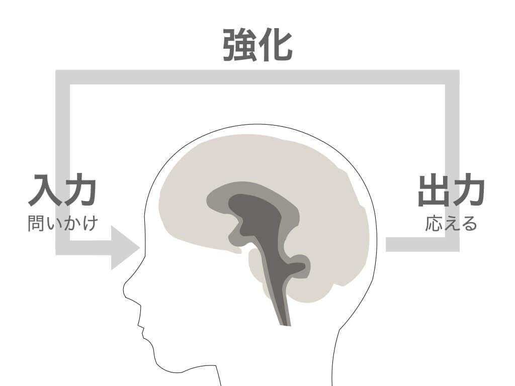 脳の仕組み「入力・出力・再入力」で思考が強化される